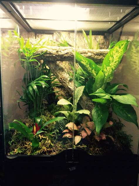 Bio-active set up for my Crested Gecko | Crested gecko