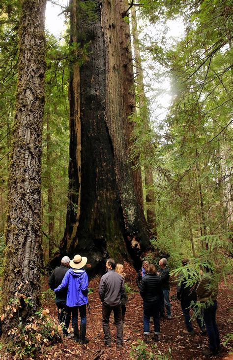 Family's legendary grove of old-growth redwoods preserved