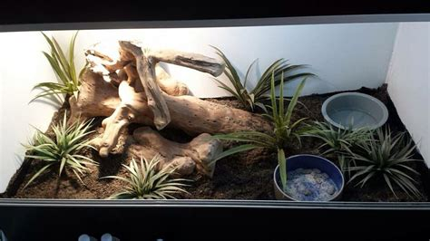 Ackie monitor set up | Reptile zoo, Reptiles and